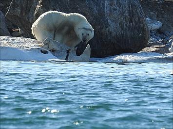 2017 Spitzbergen - Thumbnail Logbuch